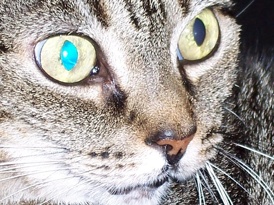 Cats Photograph - Cat Eyes by Martha Hoskins