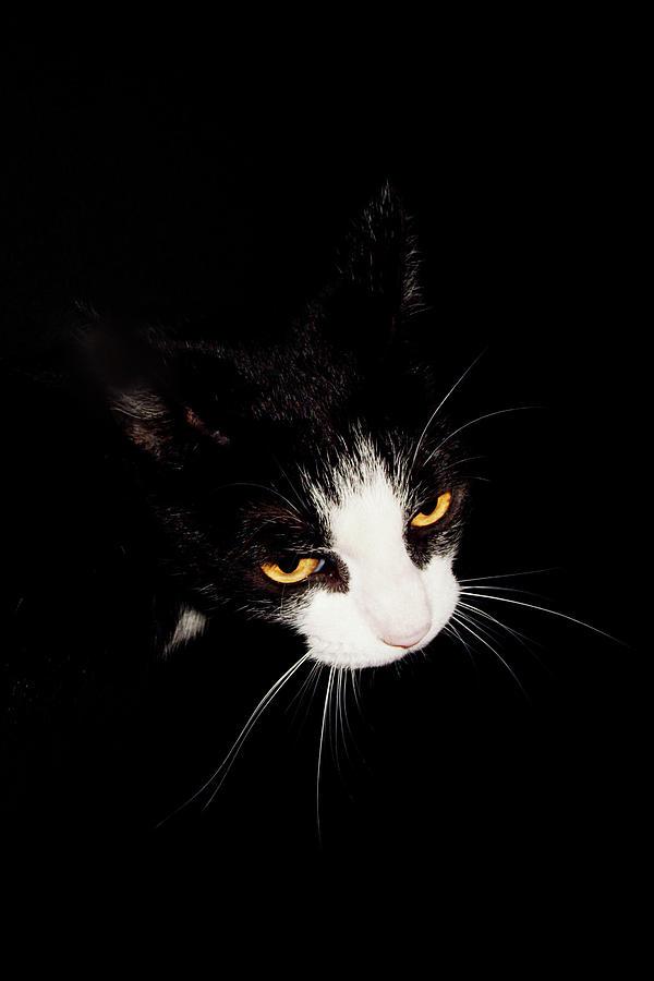Cat Eyes by Osvaldo Hamer