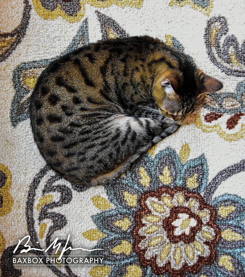 Cat Flower Photograph by Brian Jones