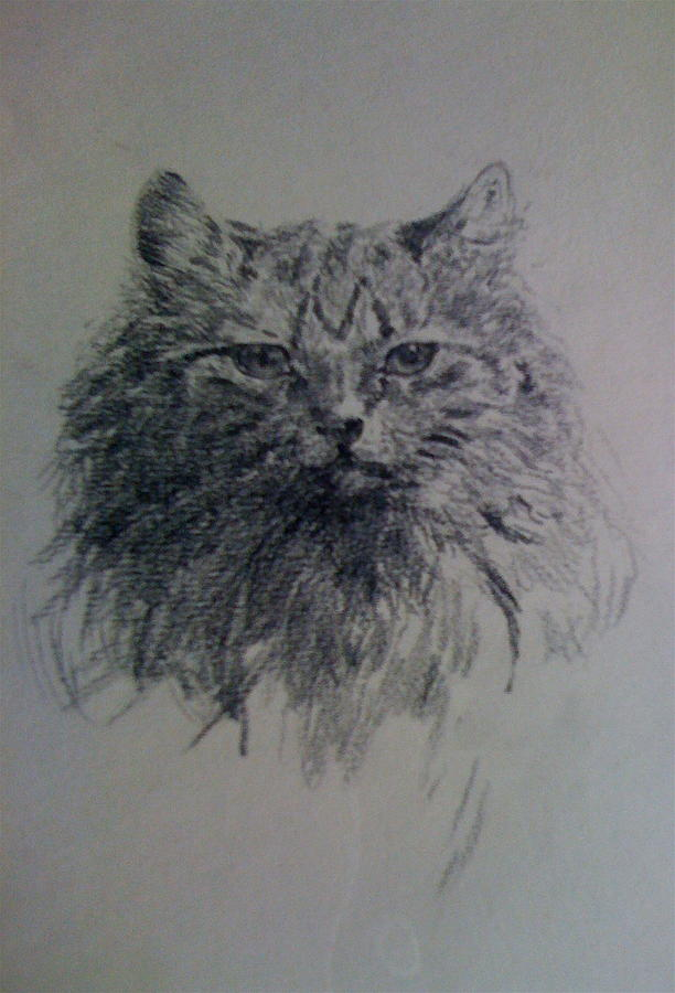 Cat Drawing - Cat by Smart Healthy Life