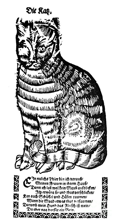 16th Century Photograph - CAT by Granger