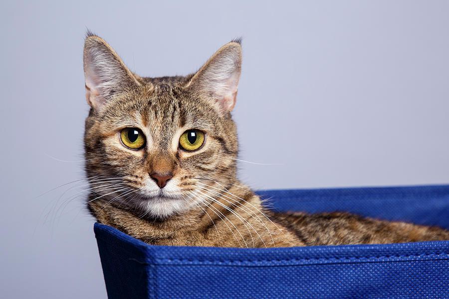 Cat In A Bin Photograph