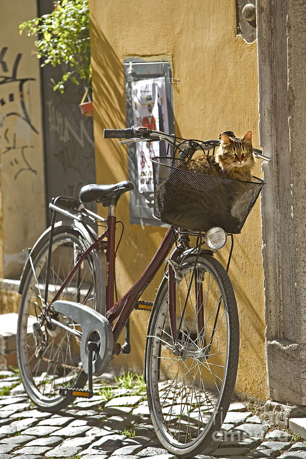 Dog In Cat Basket
