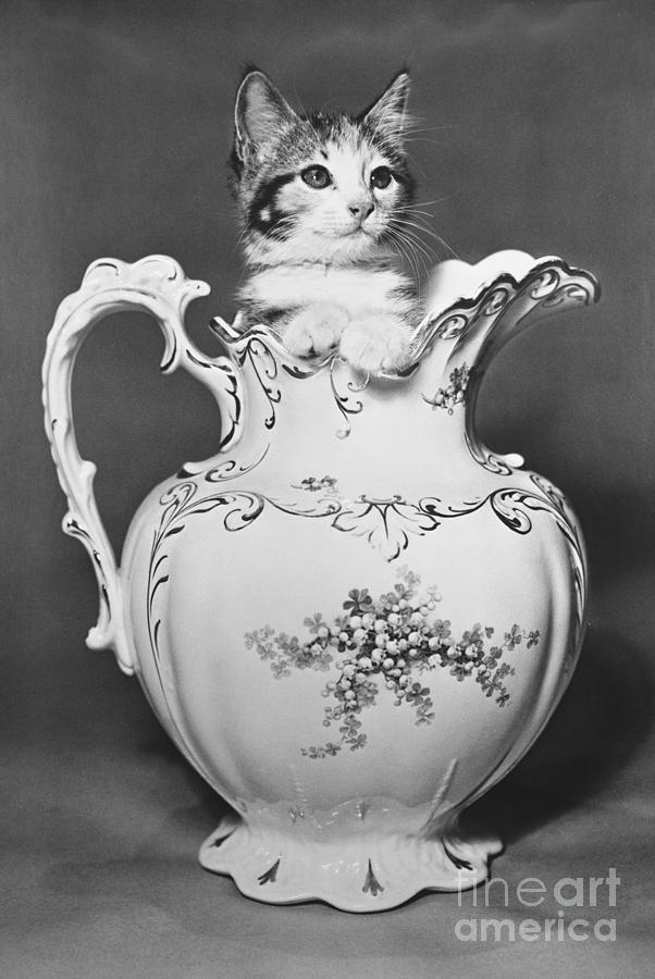 B&w Photograph - Cat In Pitcher by Larry Keahey