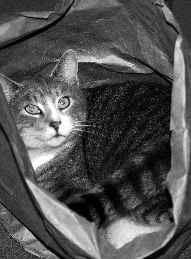 Cats Photograph - Cat In The Bag by Elizabeth Babler
