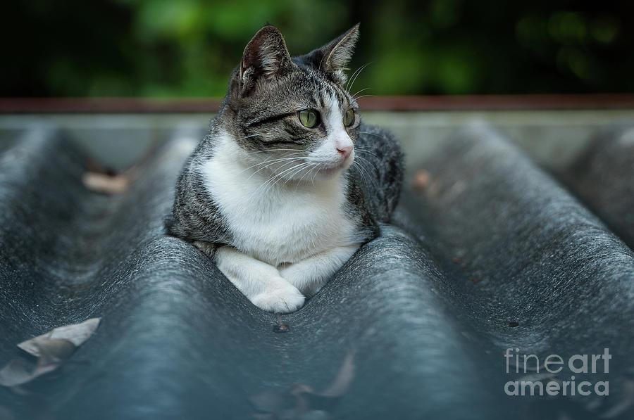 Cat Posing Photograph - Cat In The Cradle by Venura Herath
