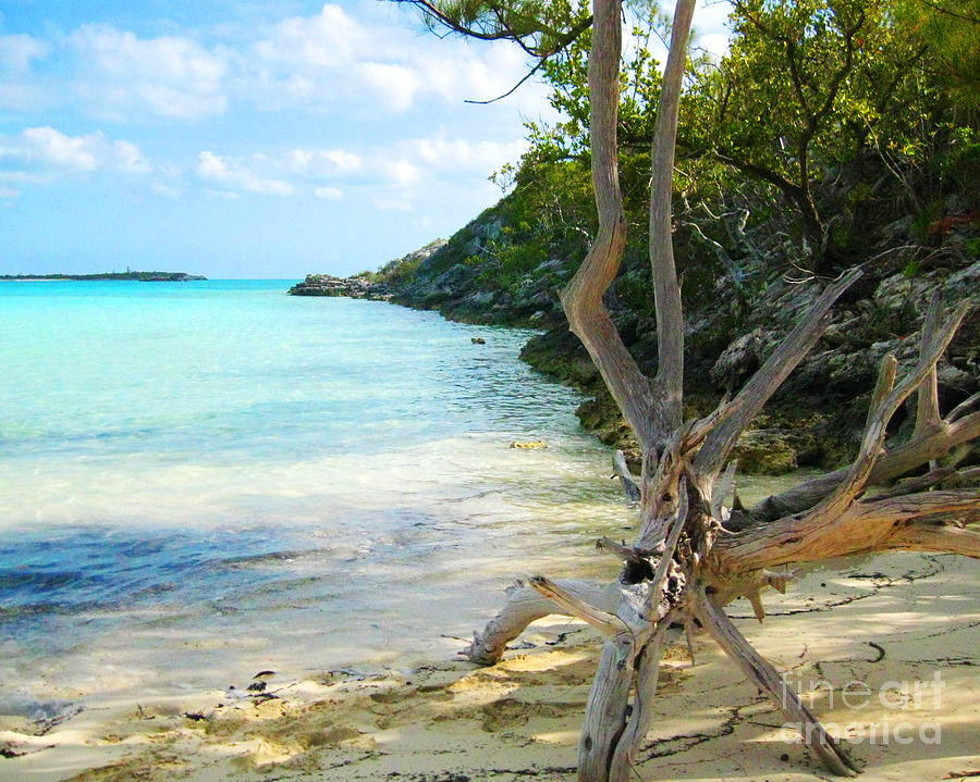 Beach Photograph - Cat Island Cove by Joseph Re