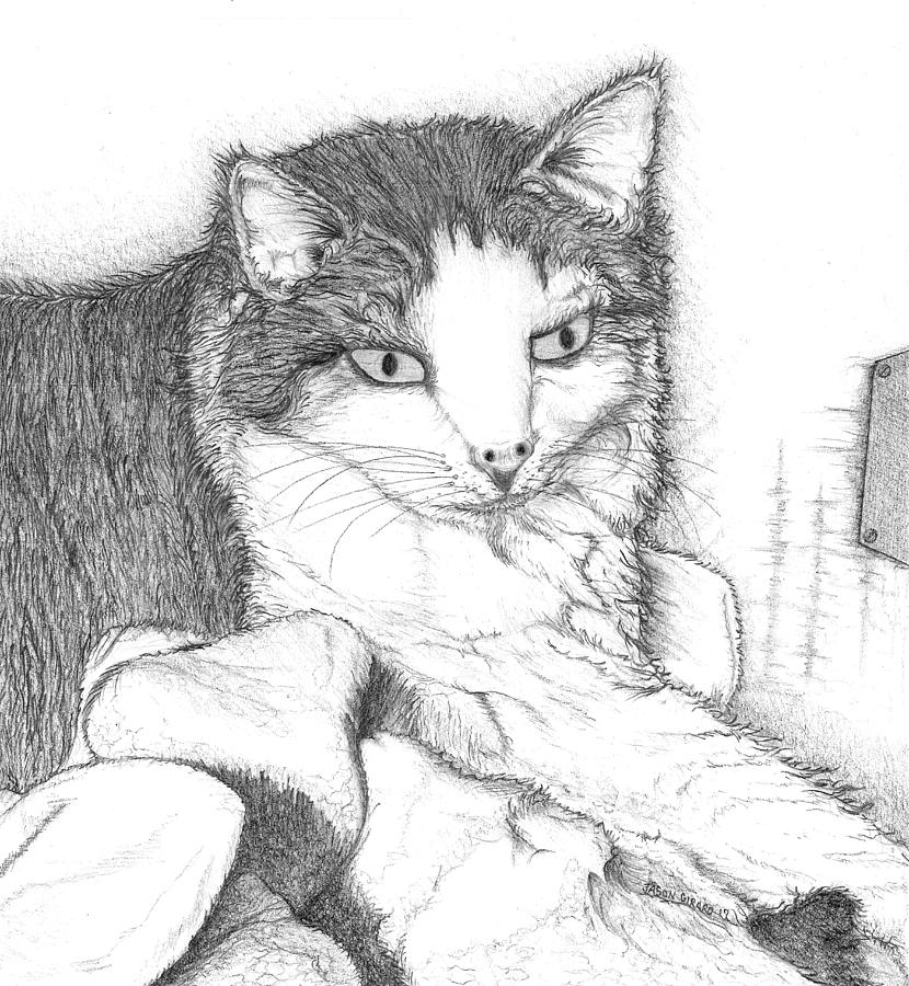 Cat Drawing - Domestic Cat by Jason Girard