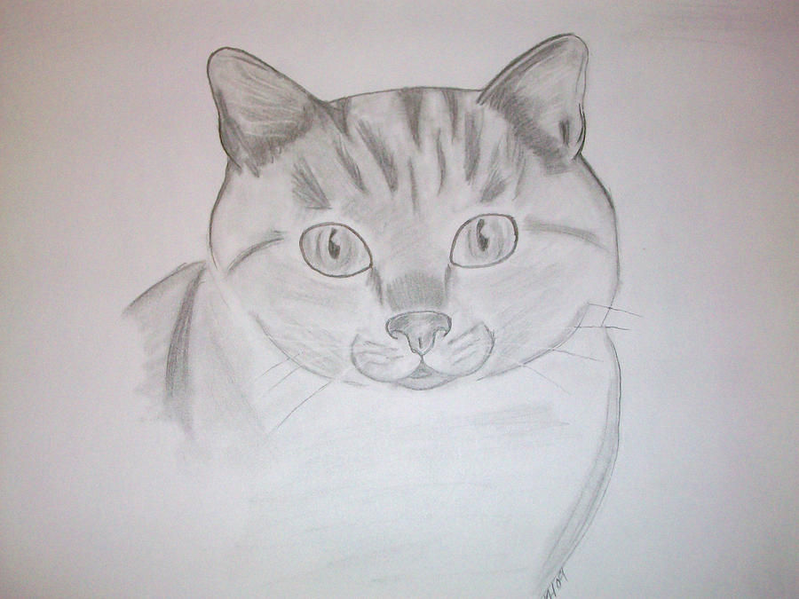 Cat Drawing - Cat by Kristen Hurley