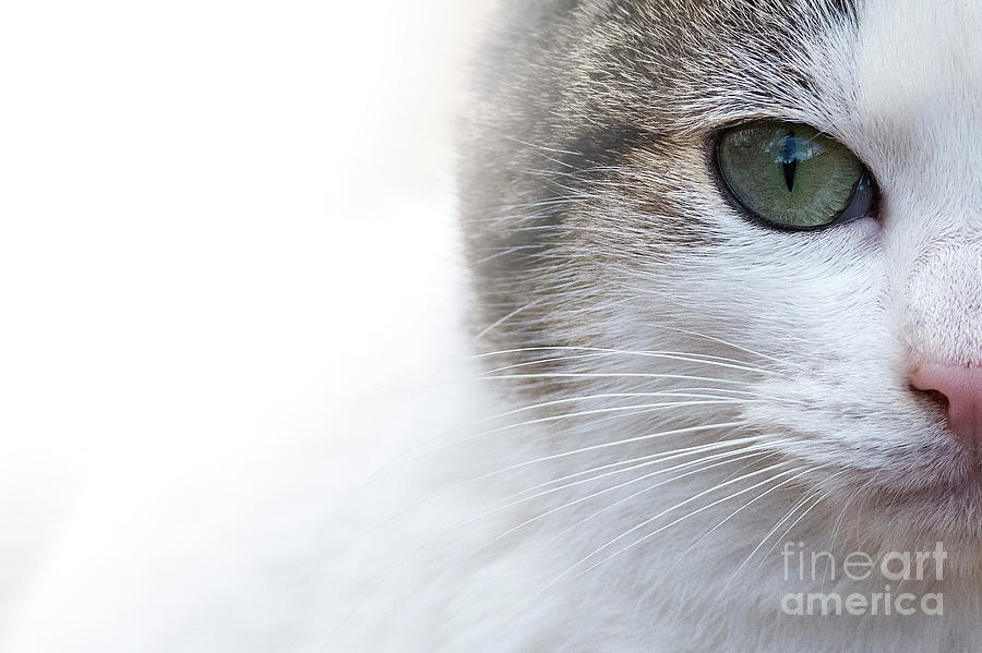 Cat Photograph - Cat Look by Hernan Bua