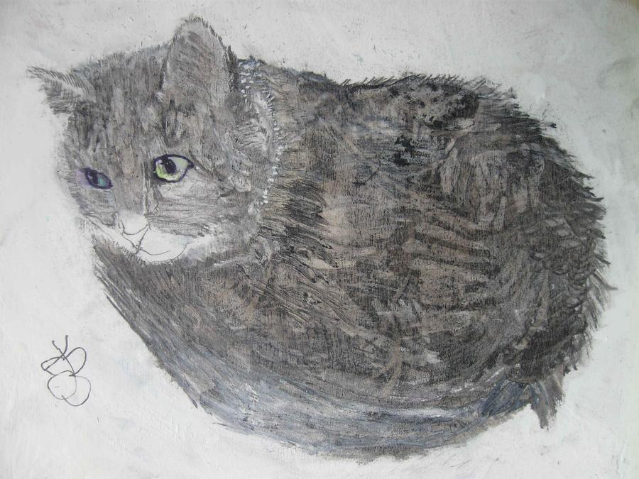 Cat named Shrimp by AJ Brown