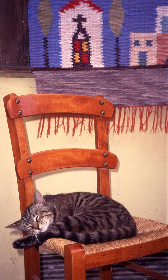 Cat Photograph - Cat Nap by Steve Outram