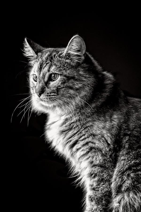 Cat Noir' by Kenneth F Konjevich