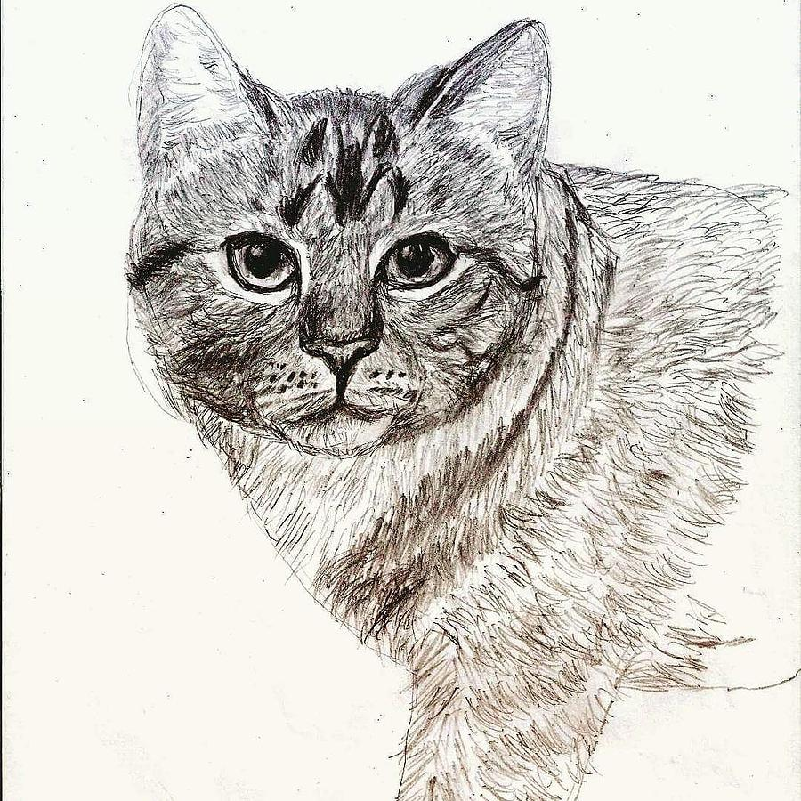 Cat portrait in pencil by rhashid dukes
