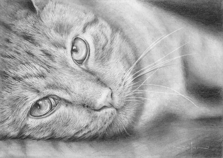 Pencil Drawing - Cat Portrait by Nolan Clark