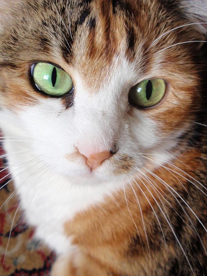 Cats Photograph - Cat Portrait by Valia Bradshaw