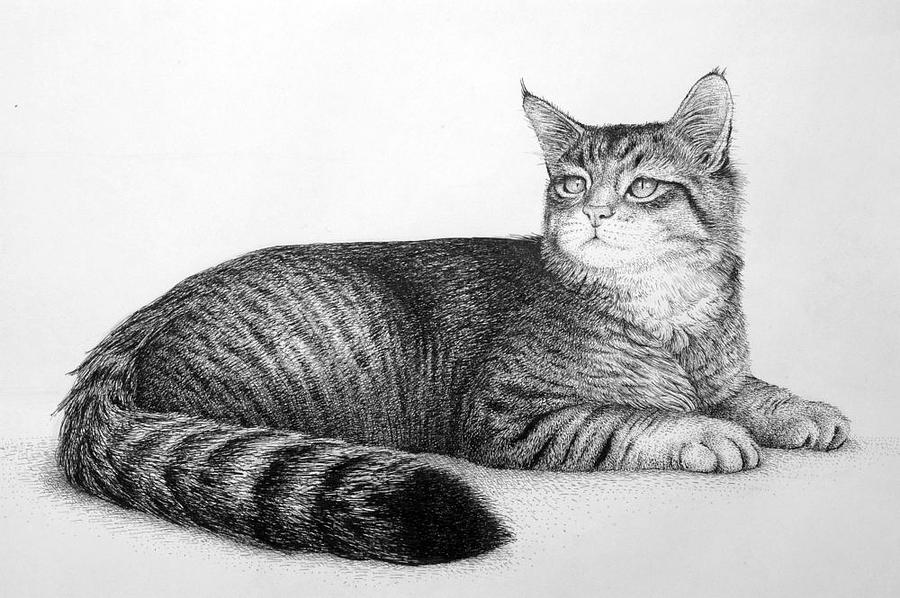 Cat Drawing - Cat by Rens Ink