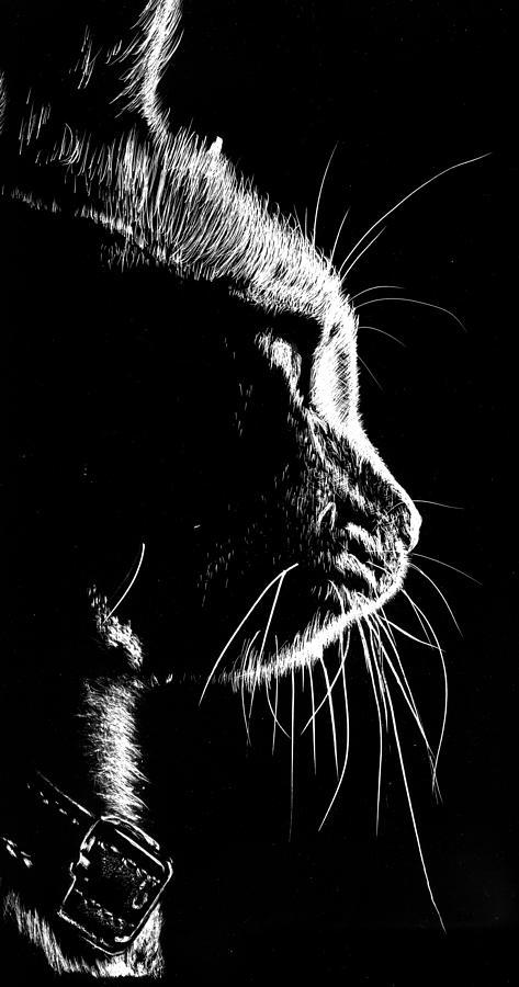 Scratchboard Drawing - Cat Silhoette by Nolan Clark