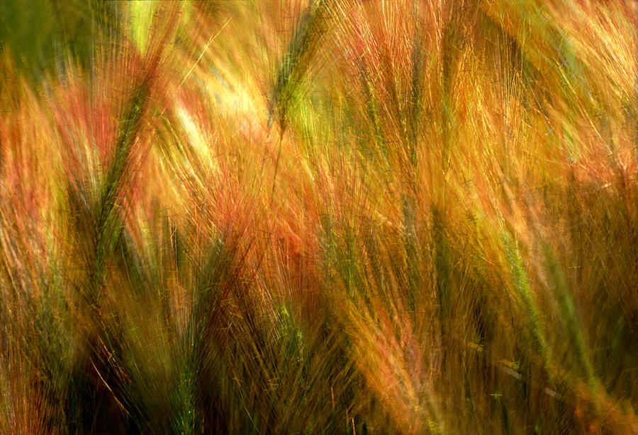 Abstract Photograph - Cat Tails by Paul Wear