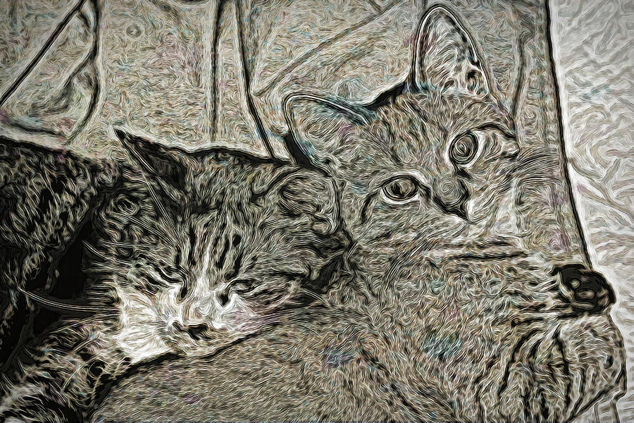 Cat Photograph - Catalina And Chunky by David Yocum