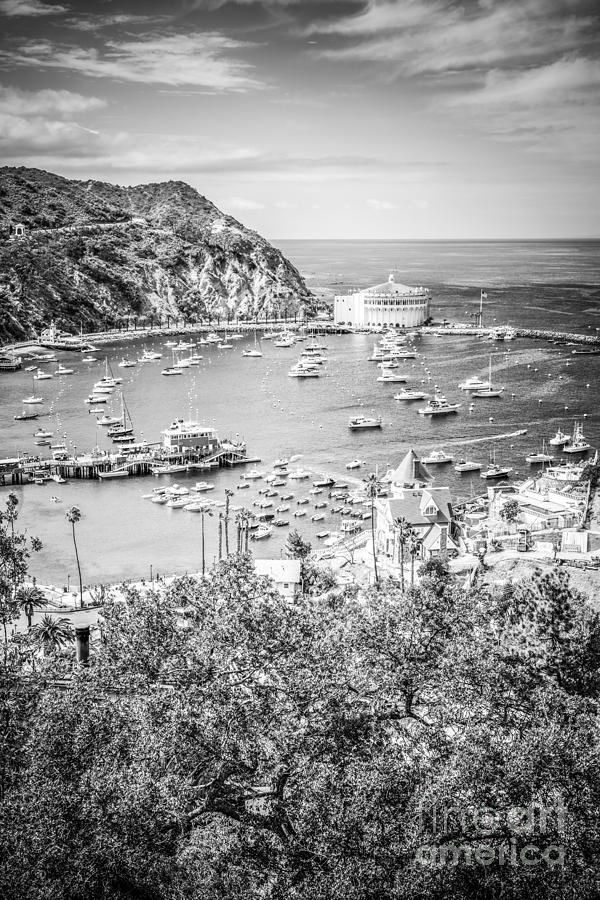 Catalina Island Vertical Black And White Photo Photograph
