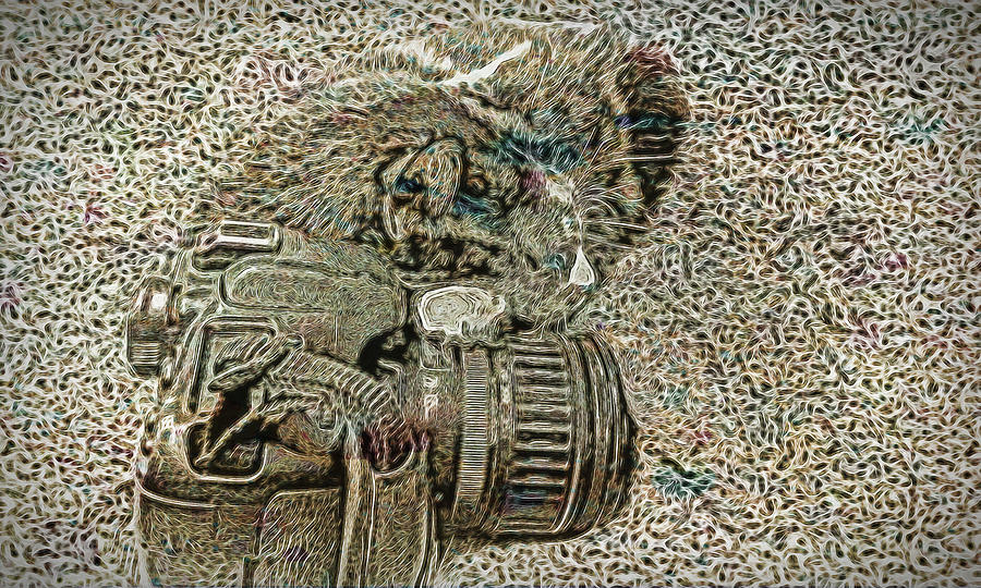 Cat Photograph - Catalina Taking A Break by David Yocum