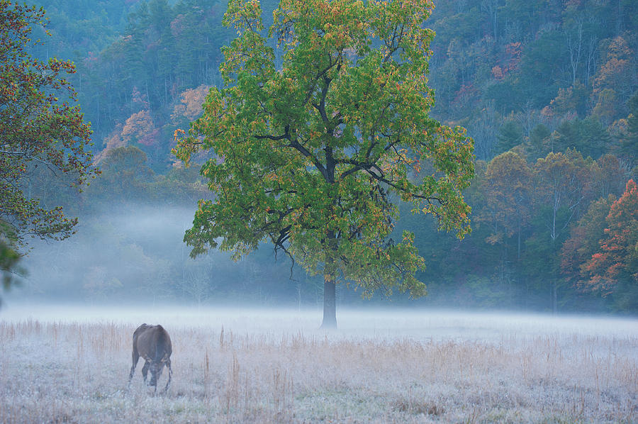 Cataloochee Morning #1 by Rick Hartigan