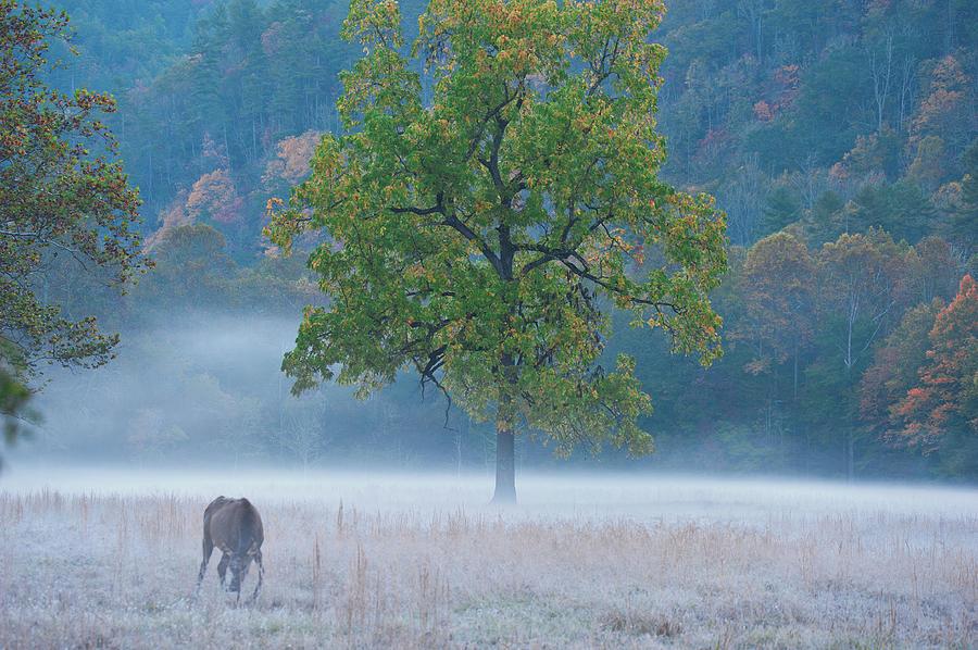 Cataloochee Morning #1 by Rick Hartigan