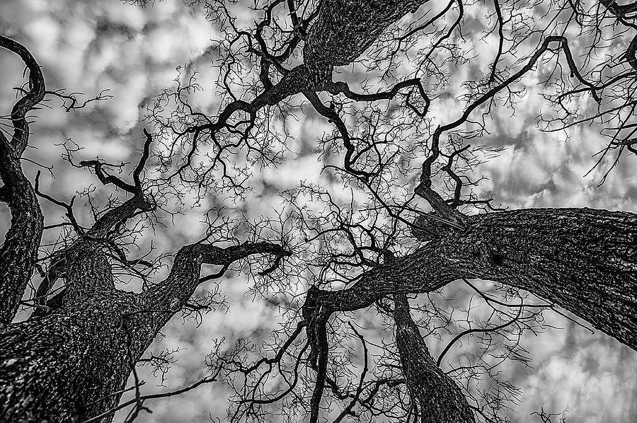 Catalpa and Altostrato Q by Scott Cordell