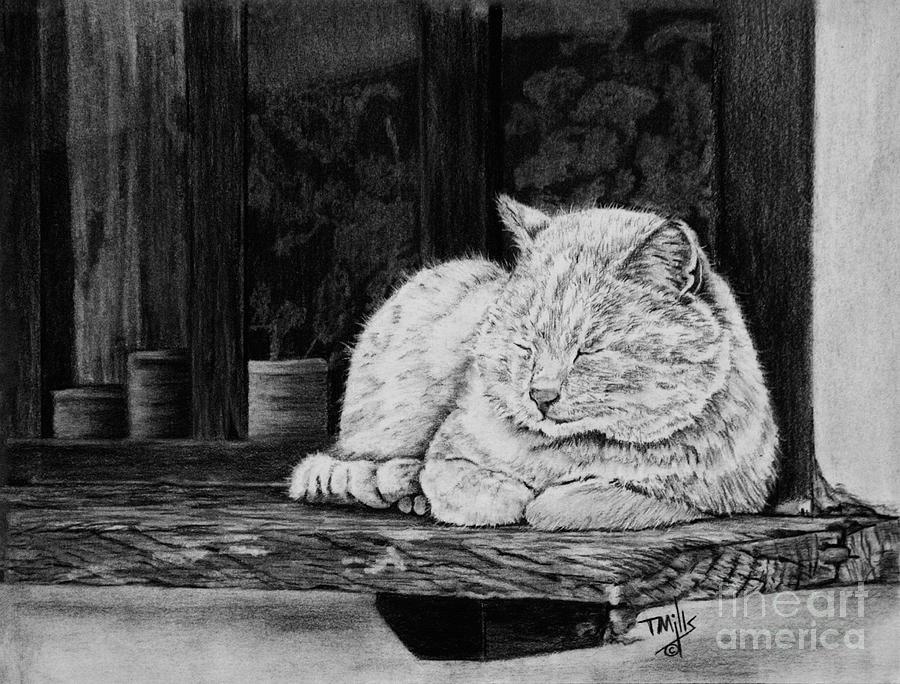 Catatonic by Terri Mills
