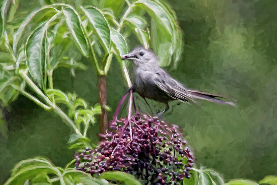Catbird by Dawn J Benko