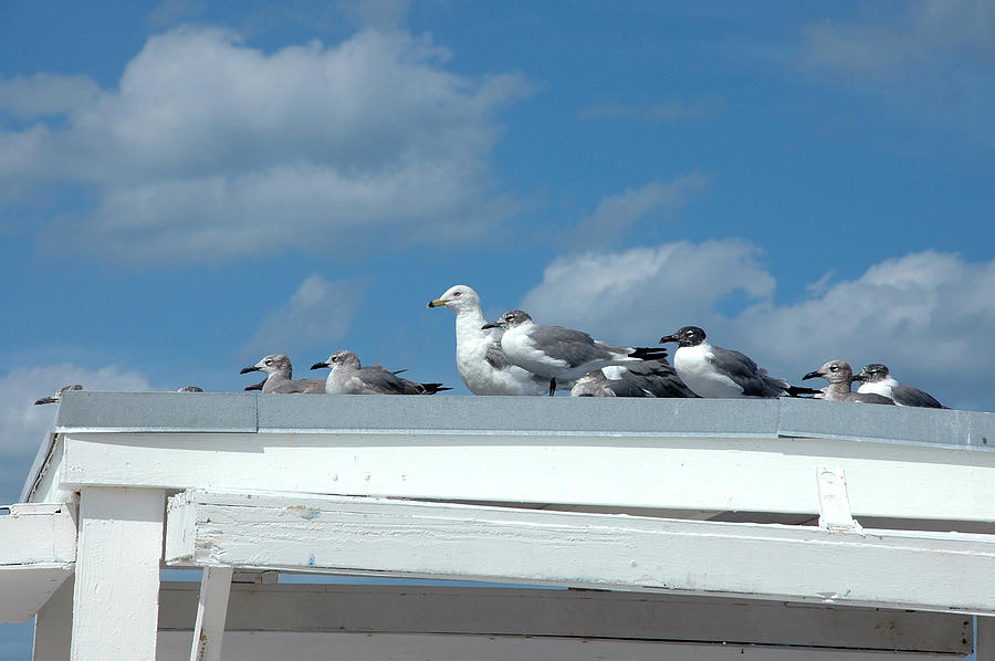 Seagulls Photograph - Catching Some Rays by Frank Mari