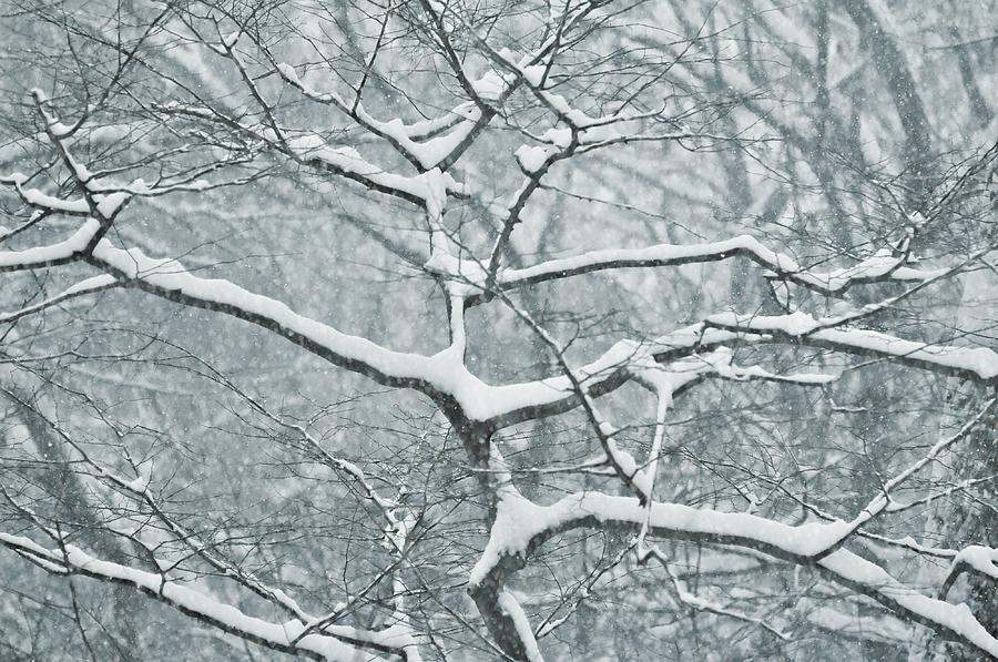 Winter Photograph - Catching The Snow by JAMART Photography