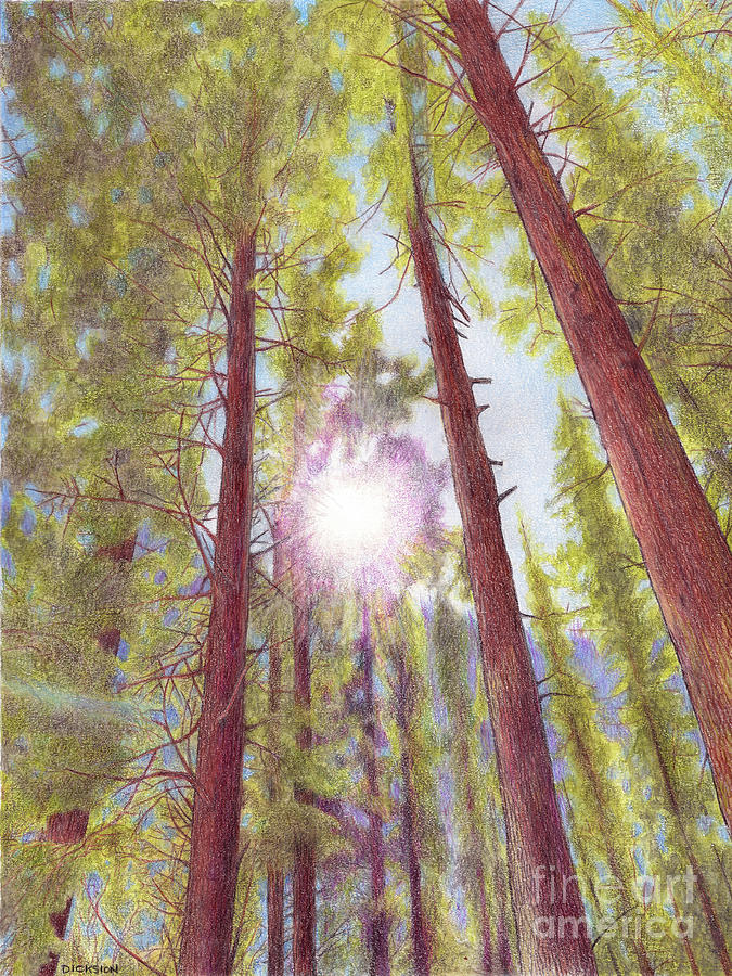 Colored Pencil Painting - Catching The Sun by Rhonda Dicksion
