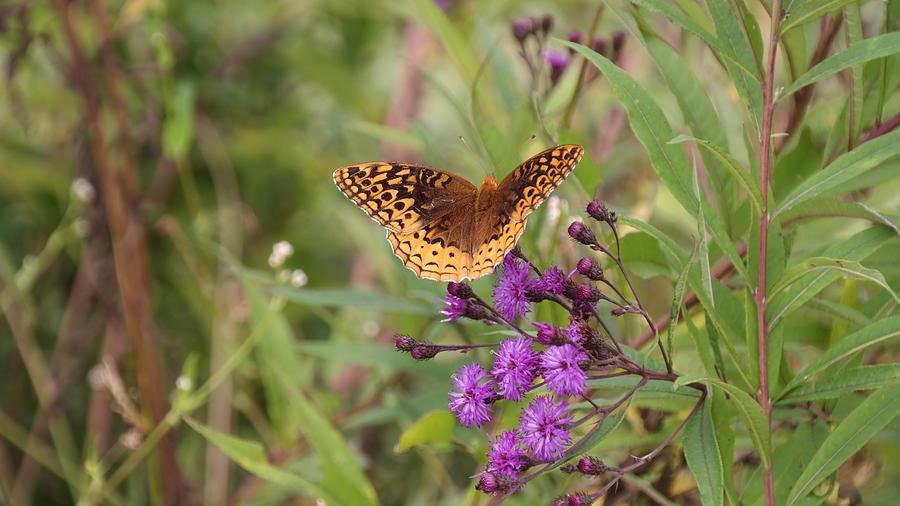 Butterfly Photograph - Caterpillar Reborn by Bill Helman