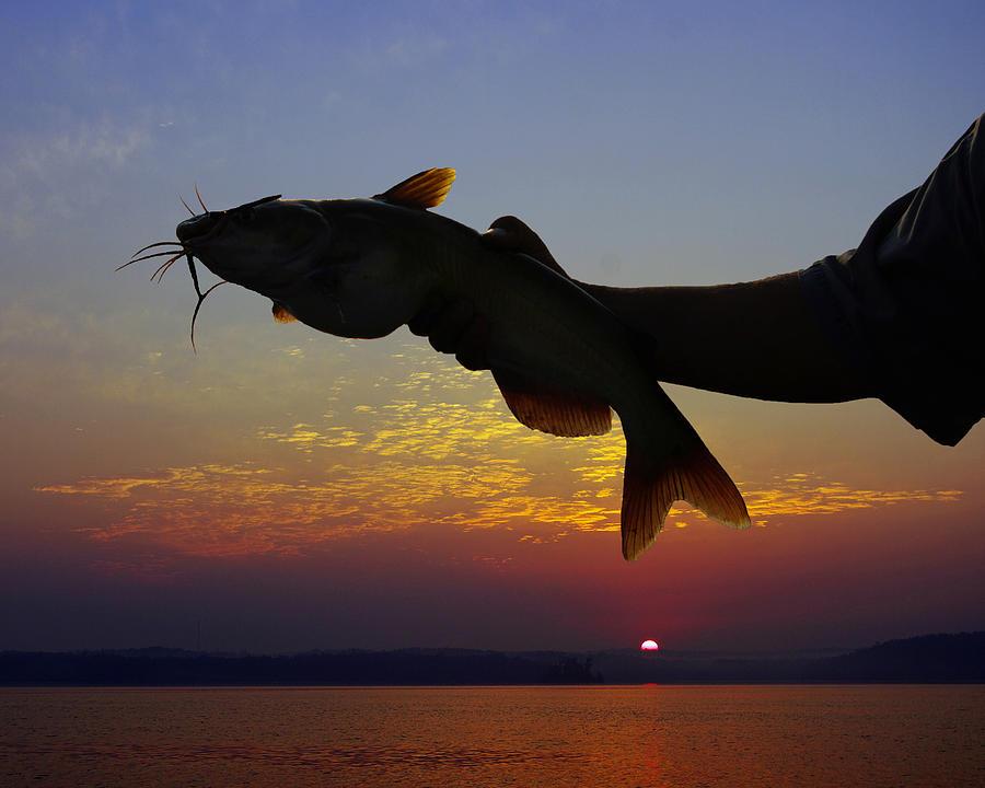 Bass Digital Art - Catfish At Sunrise by Ron Kruger