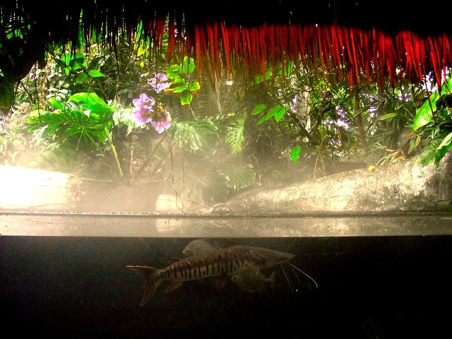 Catfish Below by John Olson