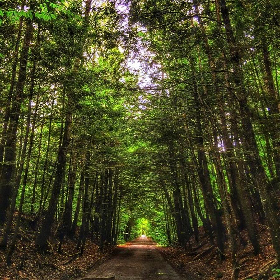 Horizons Photograph - Cathedral Forests by Nick Heap