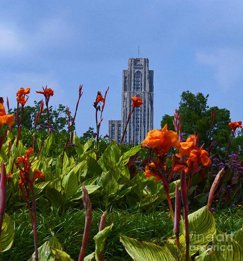 Cathedral Of Learning Photograph