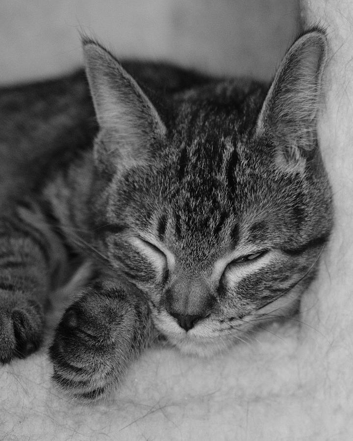 Catnap by John Moyer