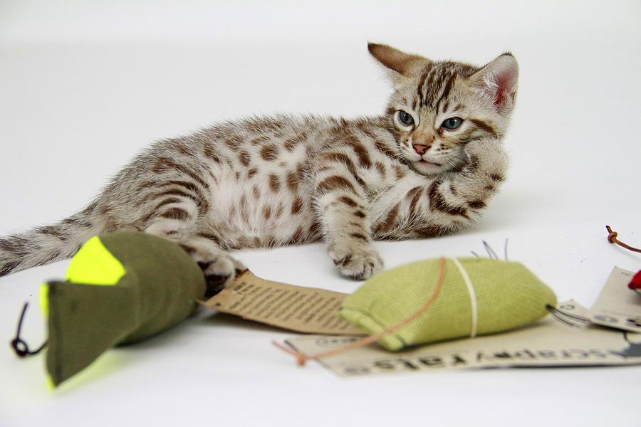 Catnip Hangover Photograph