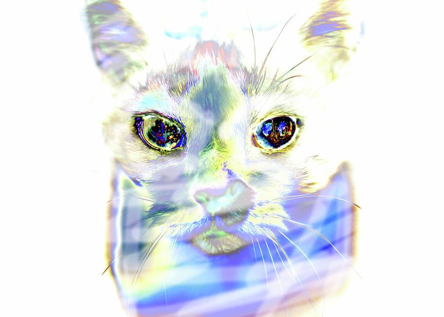 Cats Eye by Morgan Carter