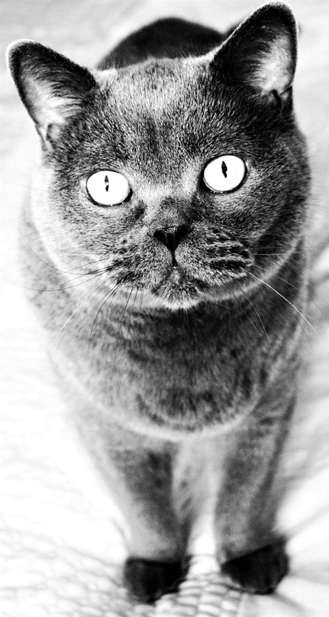 Cat's Eyes in Black and White by Nina-Rosa Duddy