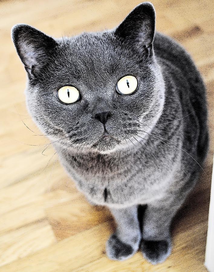 Cat's Eyes by Nina-Rosa Duddy
