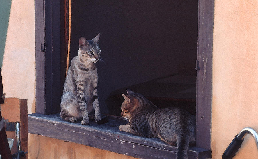 Cats Photograph - Cats on a Window Sill - St Augustine FL by Frank Mari