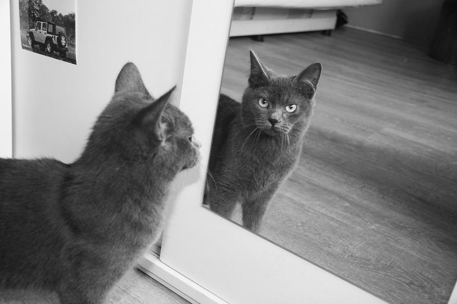 Cat S Reflection In The Mirror Photograph By Marius Puluikis