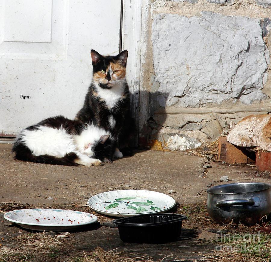 Cat Photograph - Cats Rural America  by Steven Digman