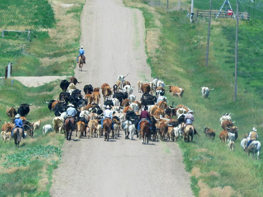 Cattle Drive by Keith Stokes