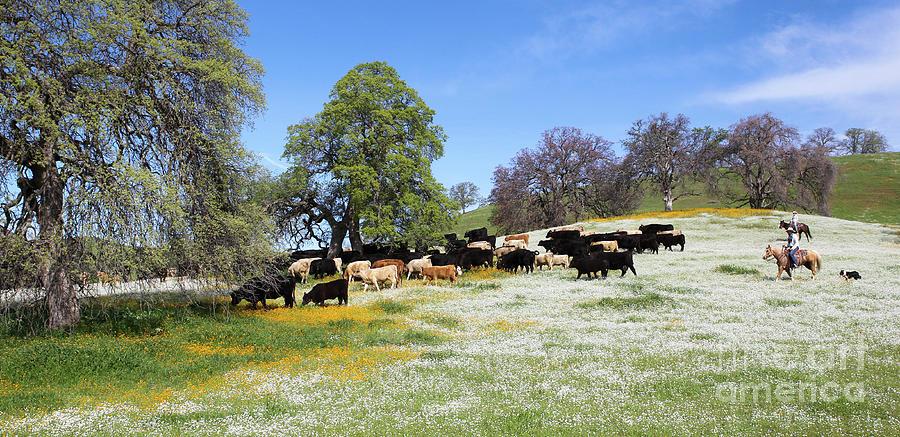 Cattle N Flowers by Diane Bohna