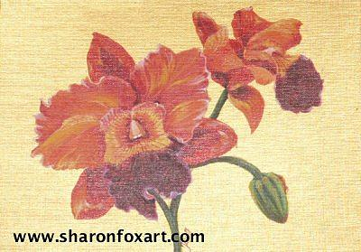 Floral Painting - Cattleya Blooms by Sharon Fox-Mould